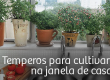 Temperos para cultivar na janela de casa